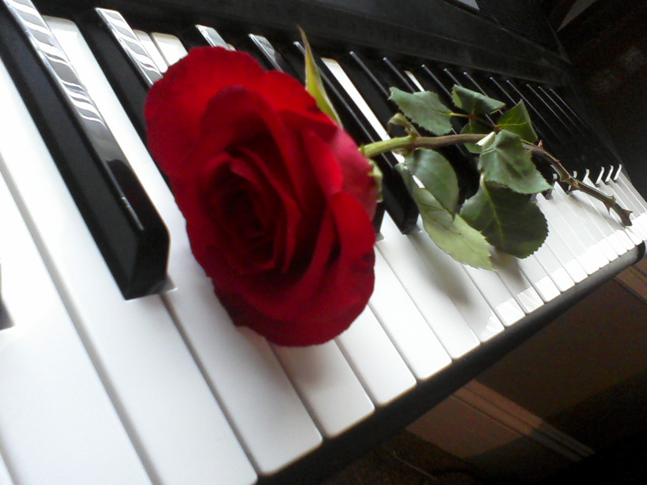 piano_rose_by_charismaticchaos93-d31g36a